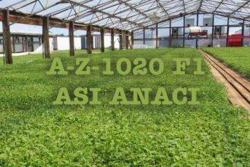 A-Z-1020 F1 AŞI ANACI